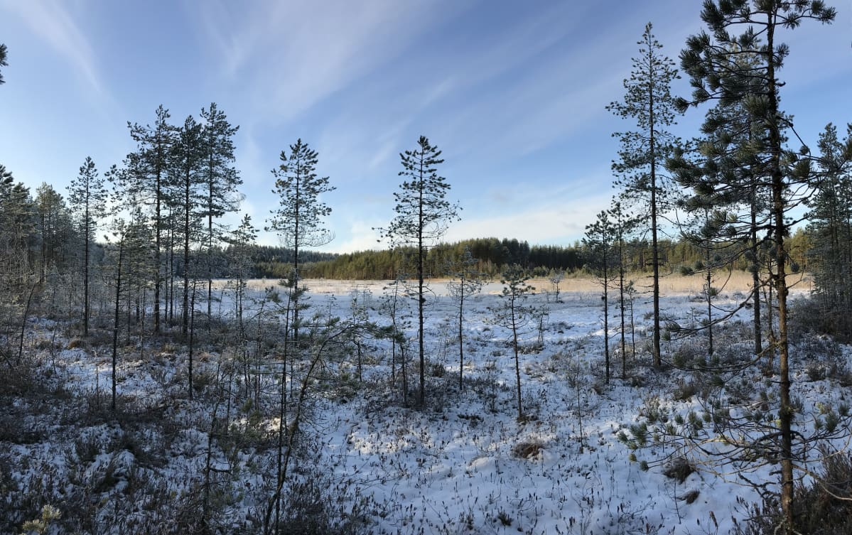 Luminen Onkilampi