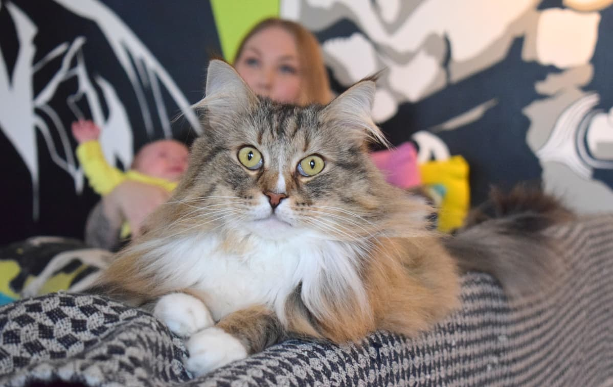 Meri Mölsä, Snorri-kissa