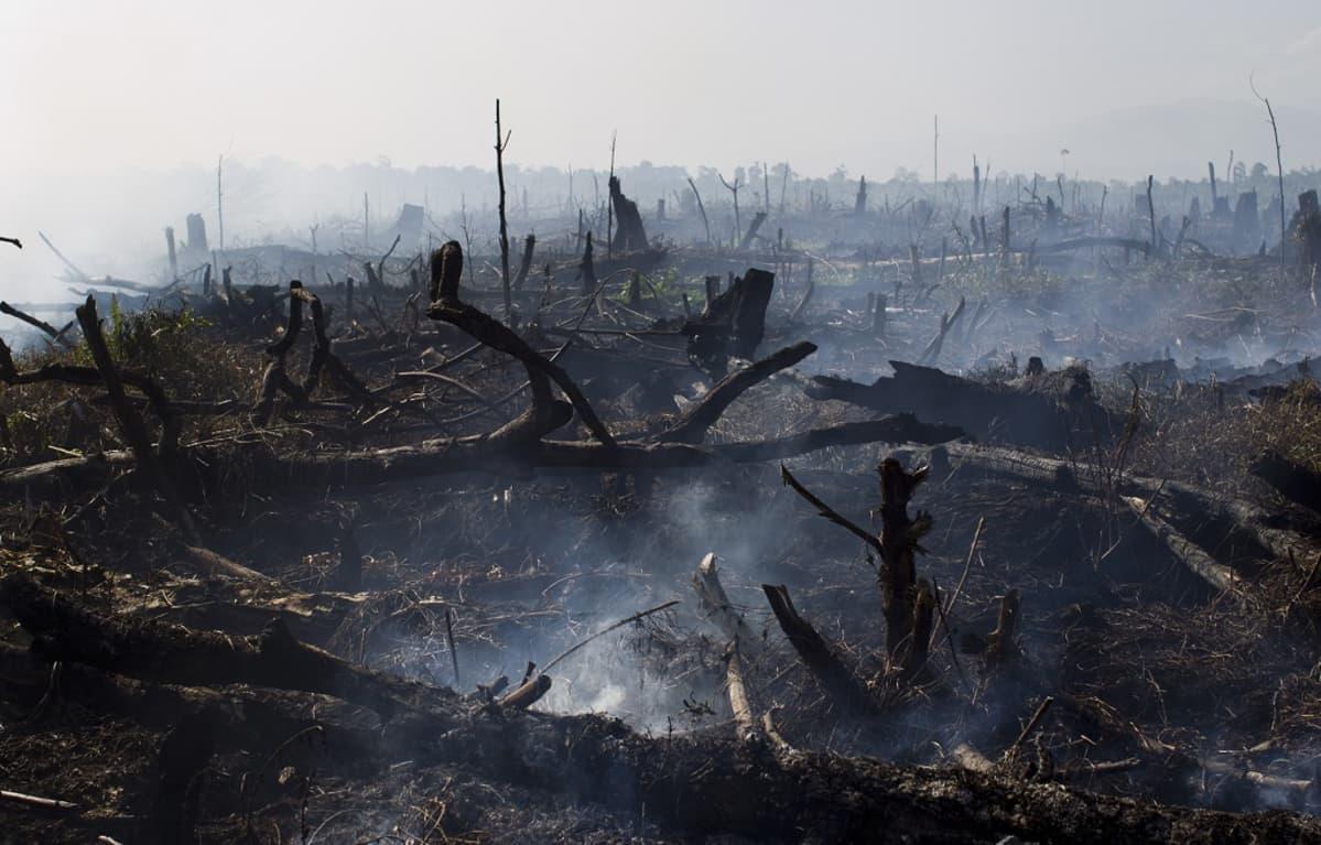 Mustunutta maastoa ja hiiltyneitä puunrunkoja.