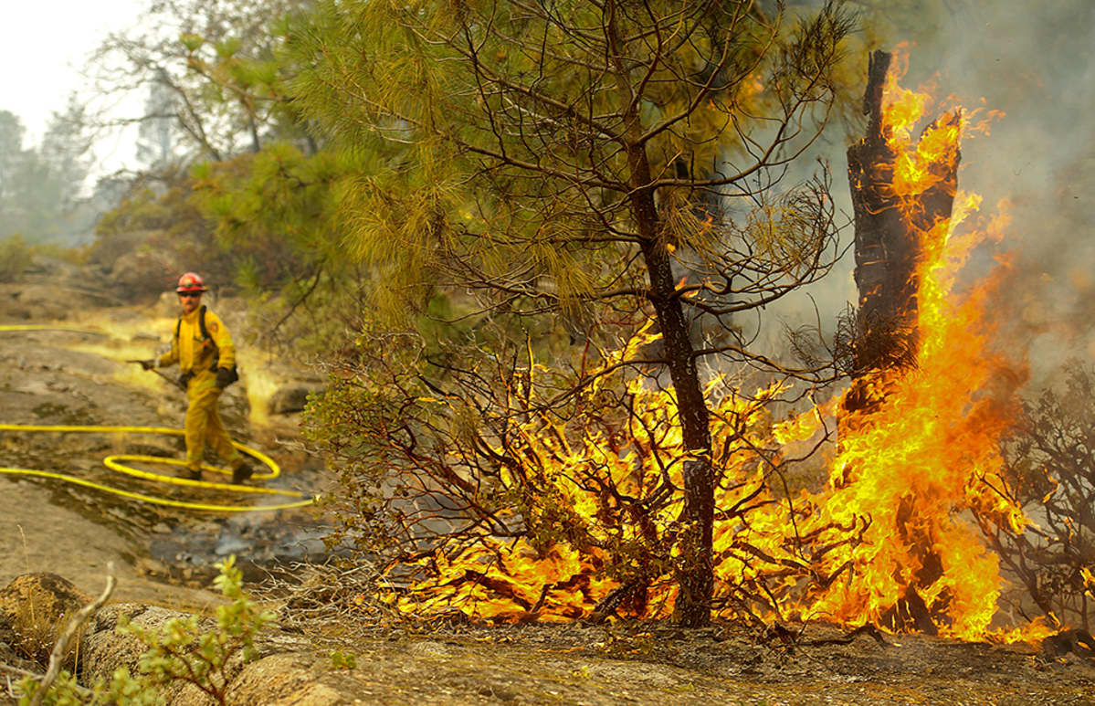 Palosotilas ja palava mänty