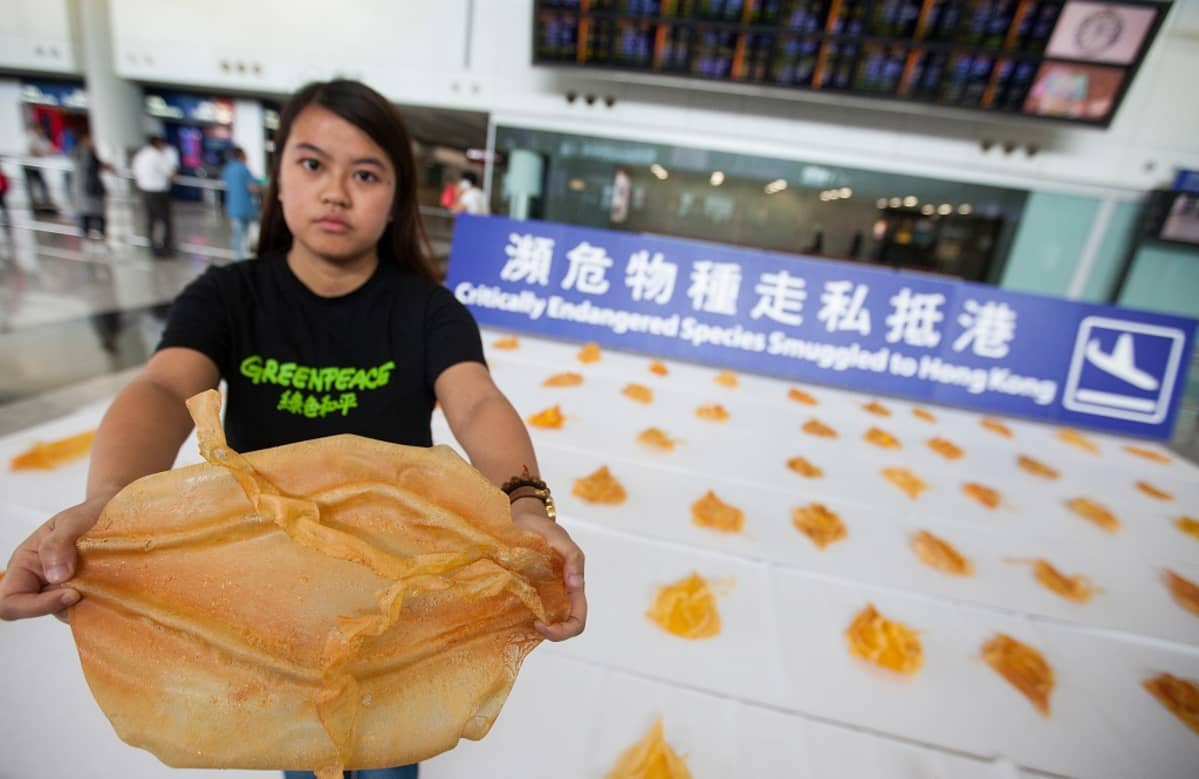 Greenpeace-paitaan pukeutunut nuori nainen levittää muovista uimarakkoa. Lattialle on aseteltu kymmeniä muita.
