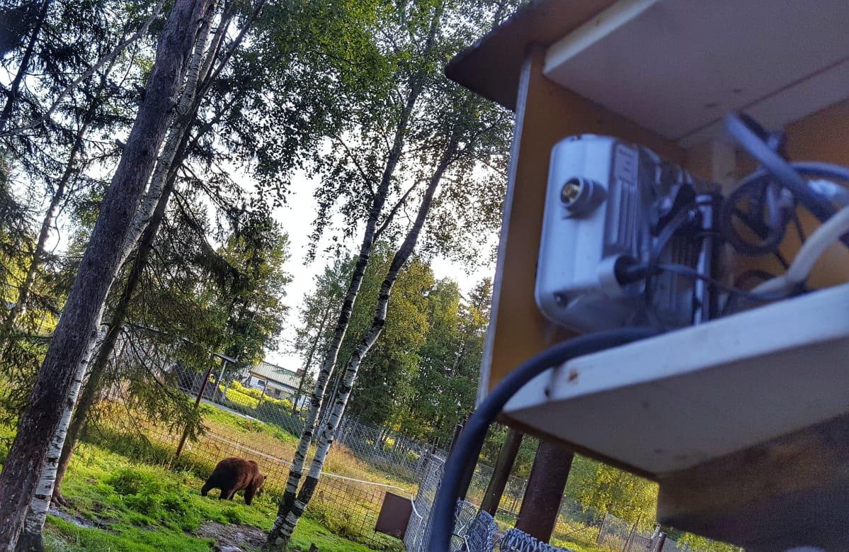 Live-kamera Kuusamon suurpetokeskuksessa.