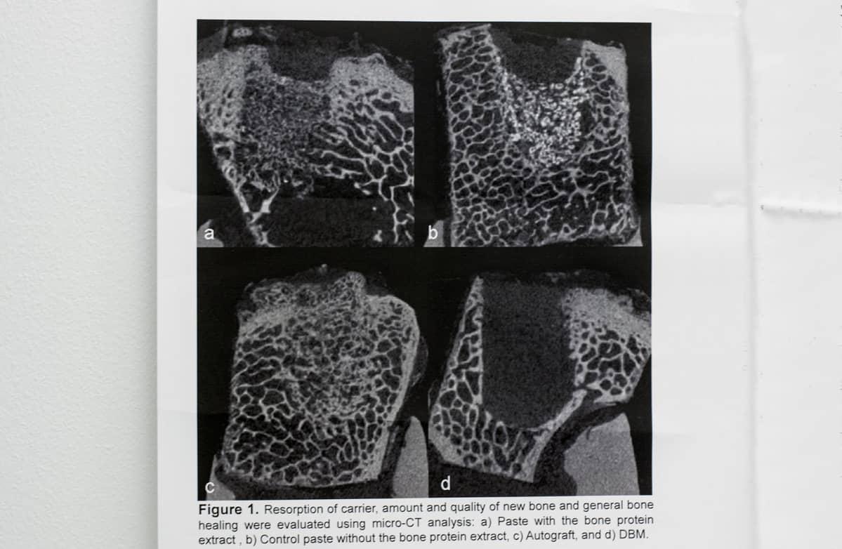 Poronluusta valmistettu proteiiniuute on pärjännyt hyvin luutumiskokeissa.