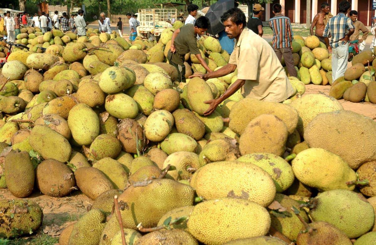 Viljelijät kasaavat jakkihedelmiä myyntiin torilla Bisramgangassa Intiassa vuonna 2007.