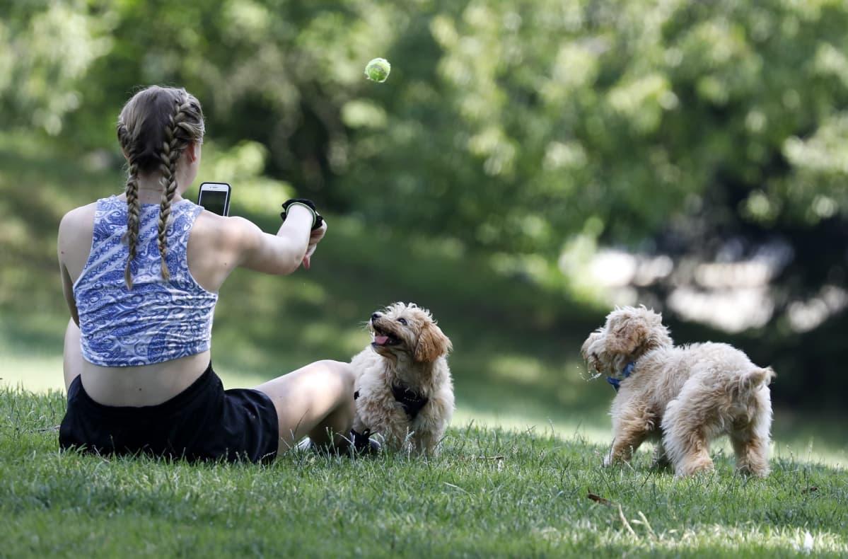 Nainen ulkoilutti koiriaan New Yorkin keskuspuistossa 20. heinäkuuta.