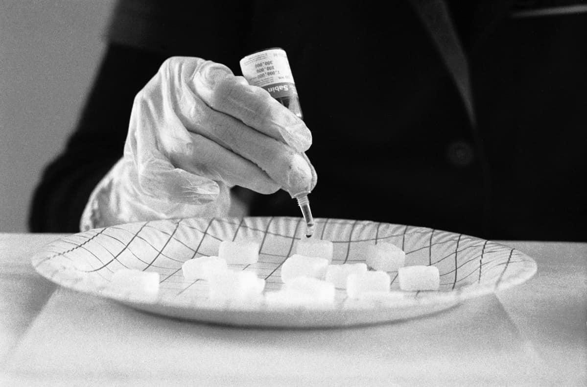 poliorokotetta laitetaan sokeripaloihin