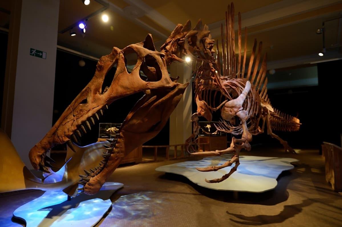 Kopio Spinosaurus aegyptiacuksen luurangosta.