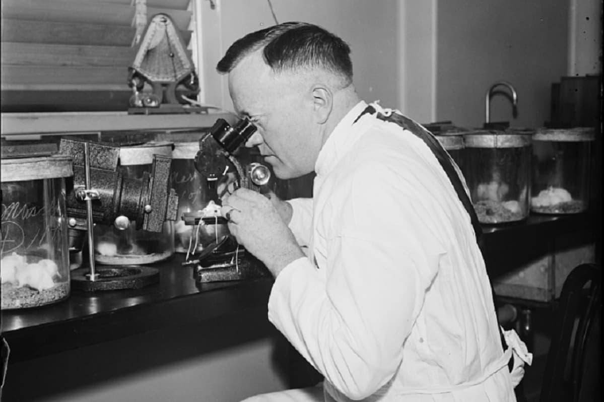 Mustavalkoinen kuva valkotakkisesta miehestä, joka katsoo vanhanaikaiseen mikroskooppiin.