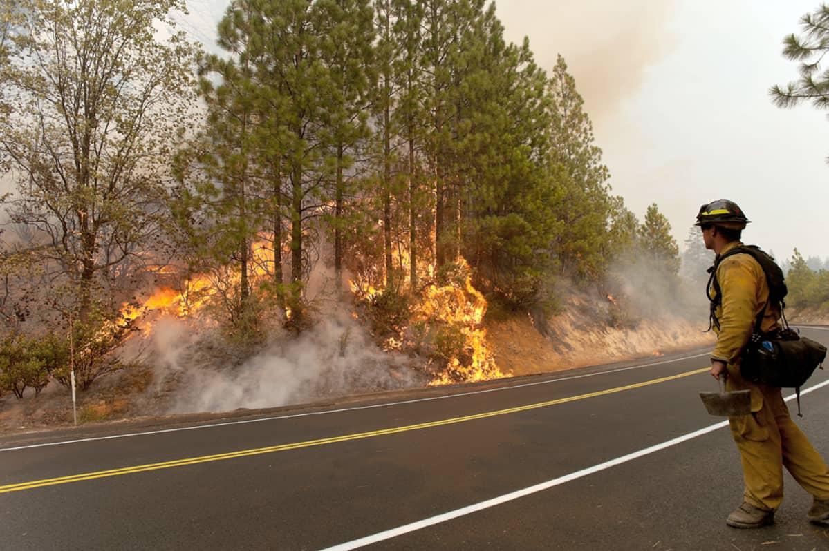 Palomies katselee palavaa metsää