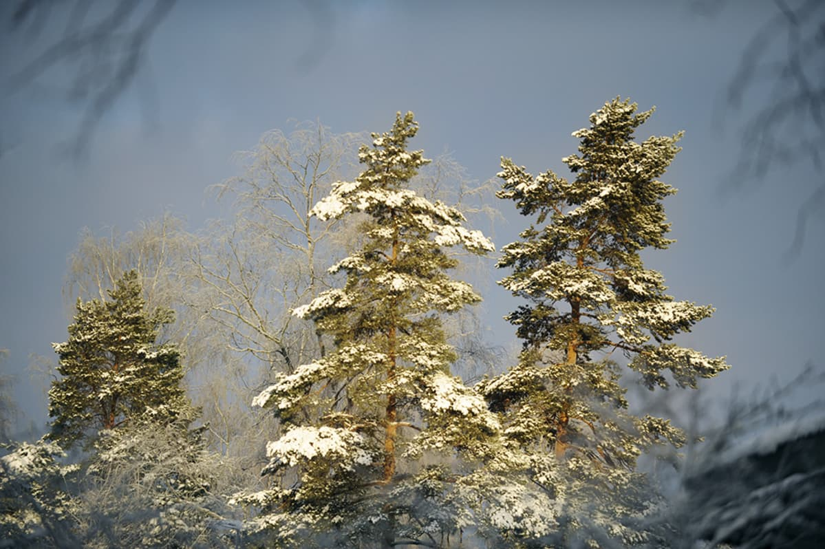 Auringonpilkahdus valaisee hetken puita.