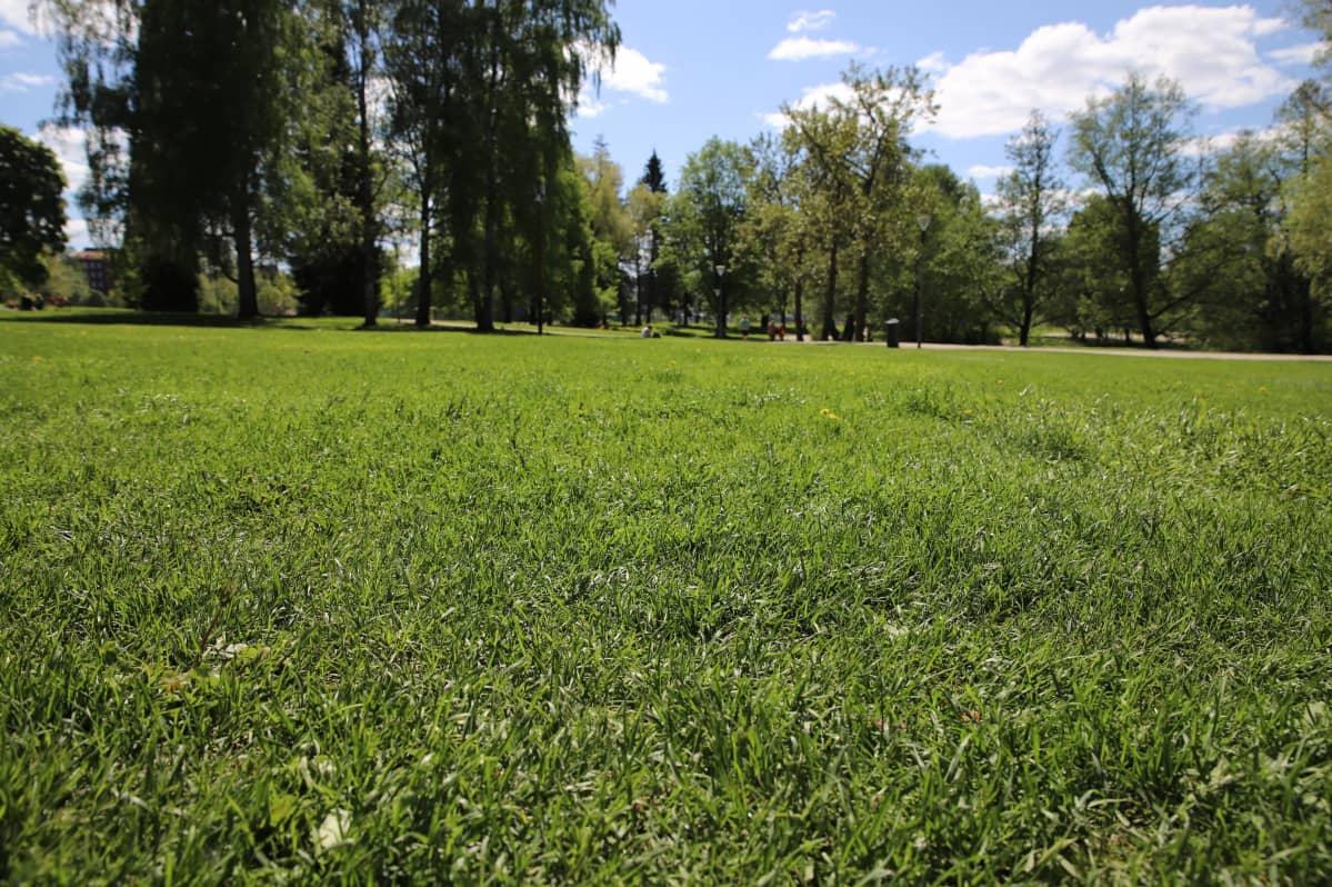 Pikku-Vesijärven puistossa on paljon nurmikkoa