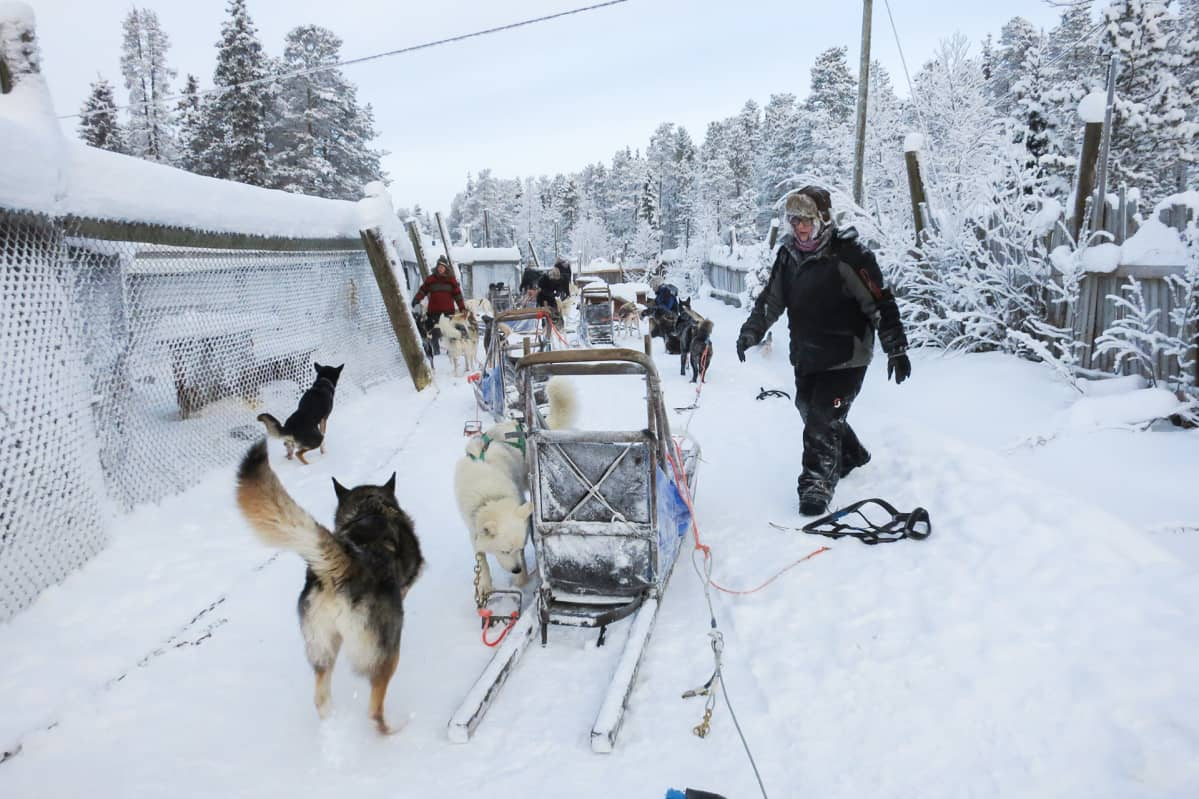 huskysafari Harriniva