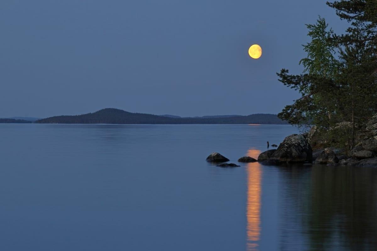 Kirkas kuu yönsinisellä taivaalla rantapuun takana.