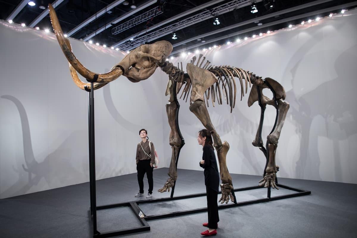 Mammutin luuranko telineessä, vieressä kaksi ihmistä