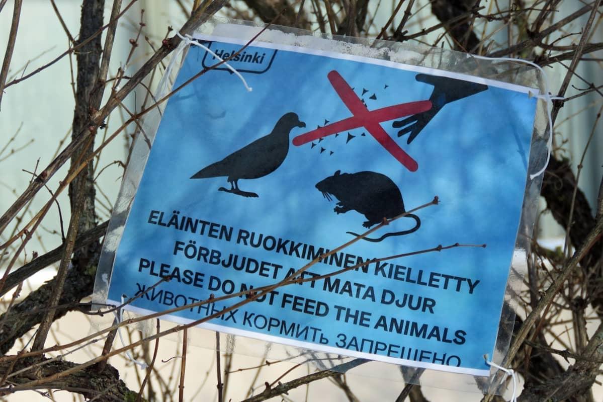 Oksaan narulla sidottu kyltti kieltää sanallisesti ja kuvallisesti ruokkimasta eläimiä. Kuvassa on pulu ja rotta.