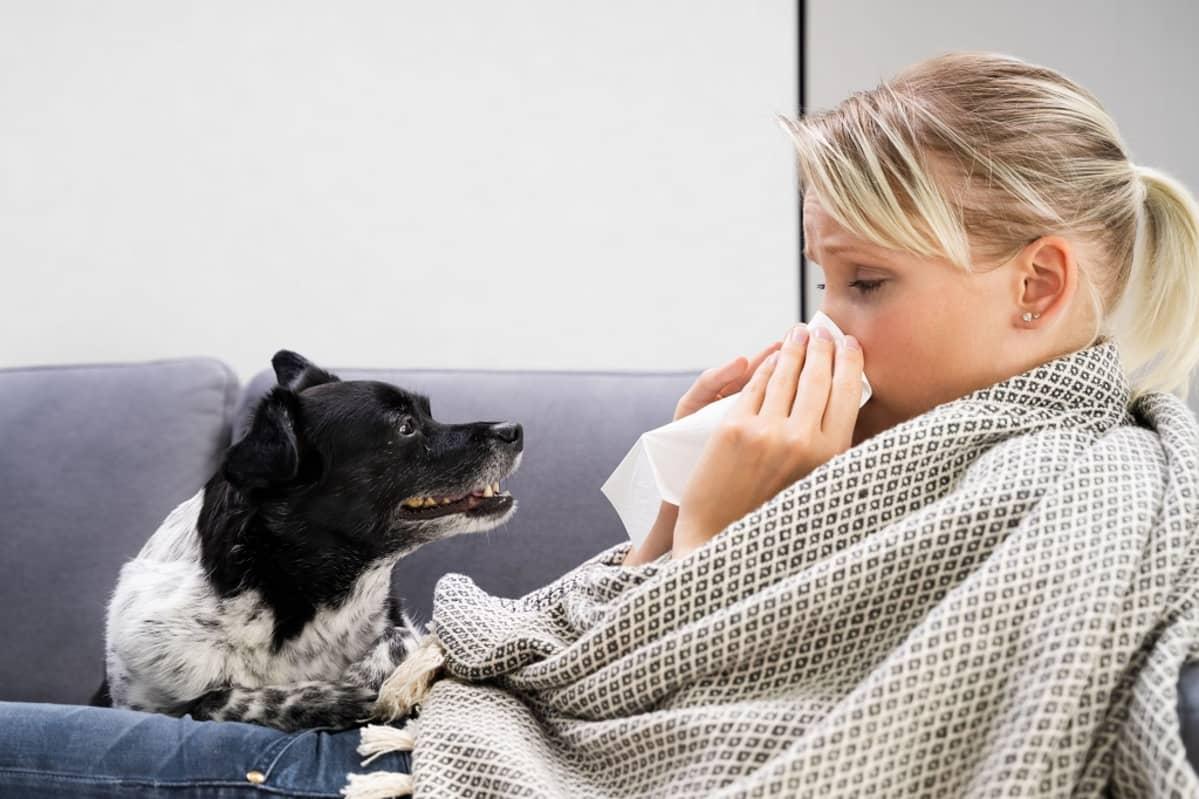 Sohvalla istuva, huopaan kietoutunut nainen niistää. Koira katselee.
