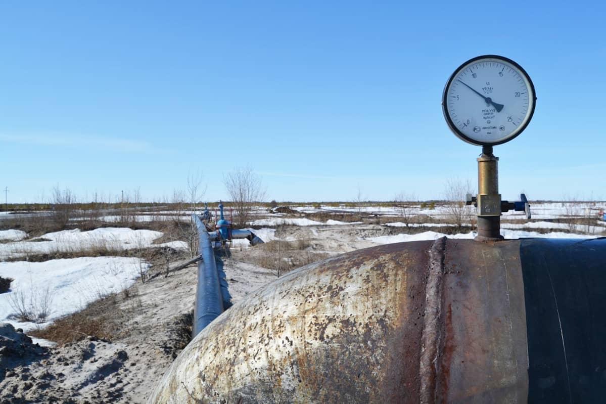 Öljyputki taigalla. Venäjä tuottaa öljyä ennätystahtia. Maaliskuussa öljyä pumpattiin 10,91 miljoonaa barellia päivässä, mikä on enemmän kuin kertaakaan Venäjällä sitten neuvostoaikojen.
