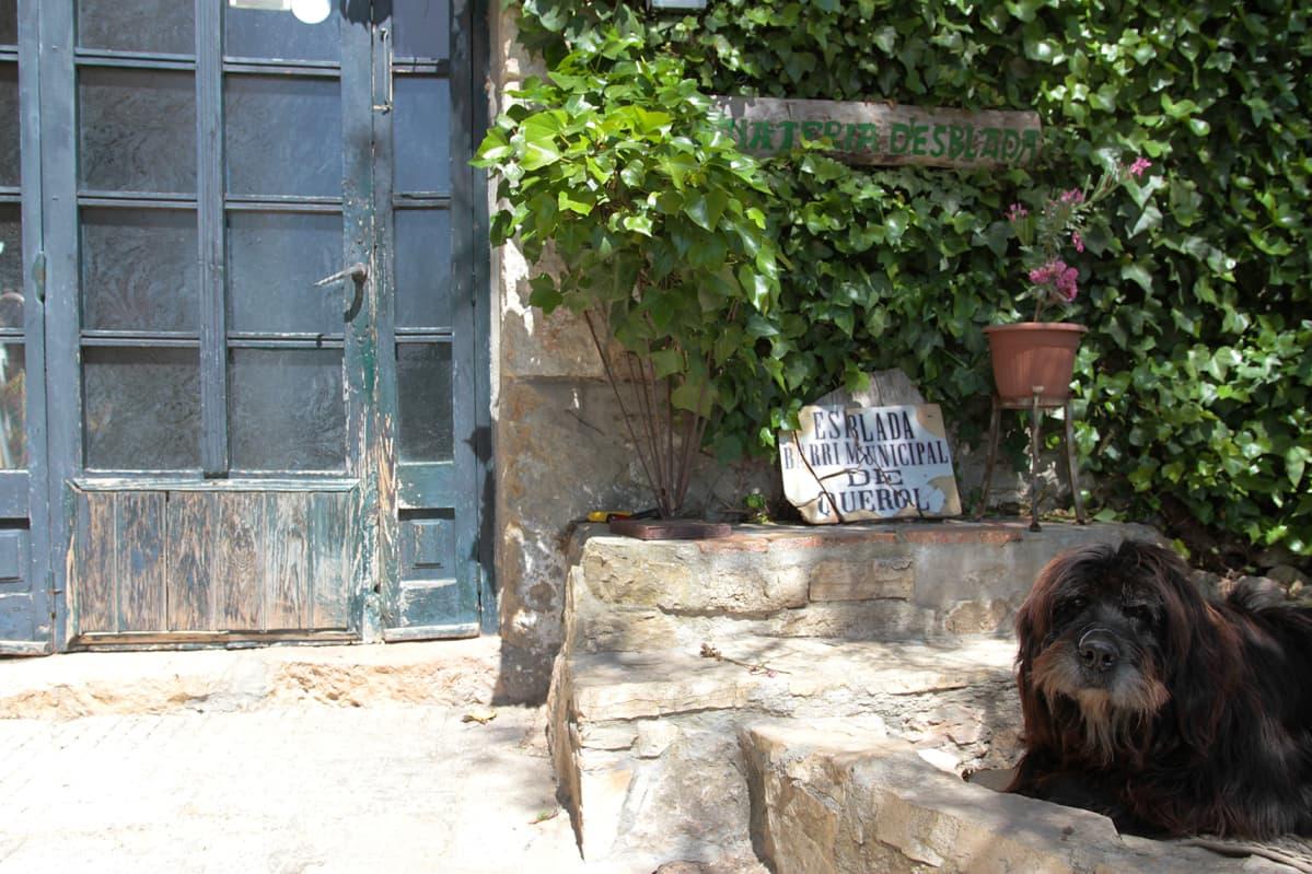 Koira ulko-oven vieressä. Esbladan ainoiden asukkaiden Martinezien lisäksi kylään saattaa muuttaa lähitulevaisuudessa nuoria perheitä.
