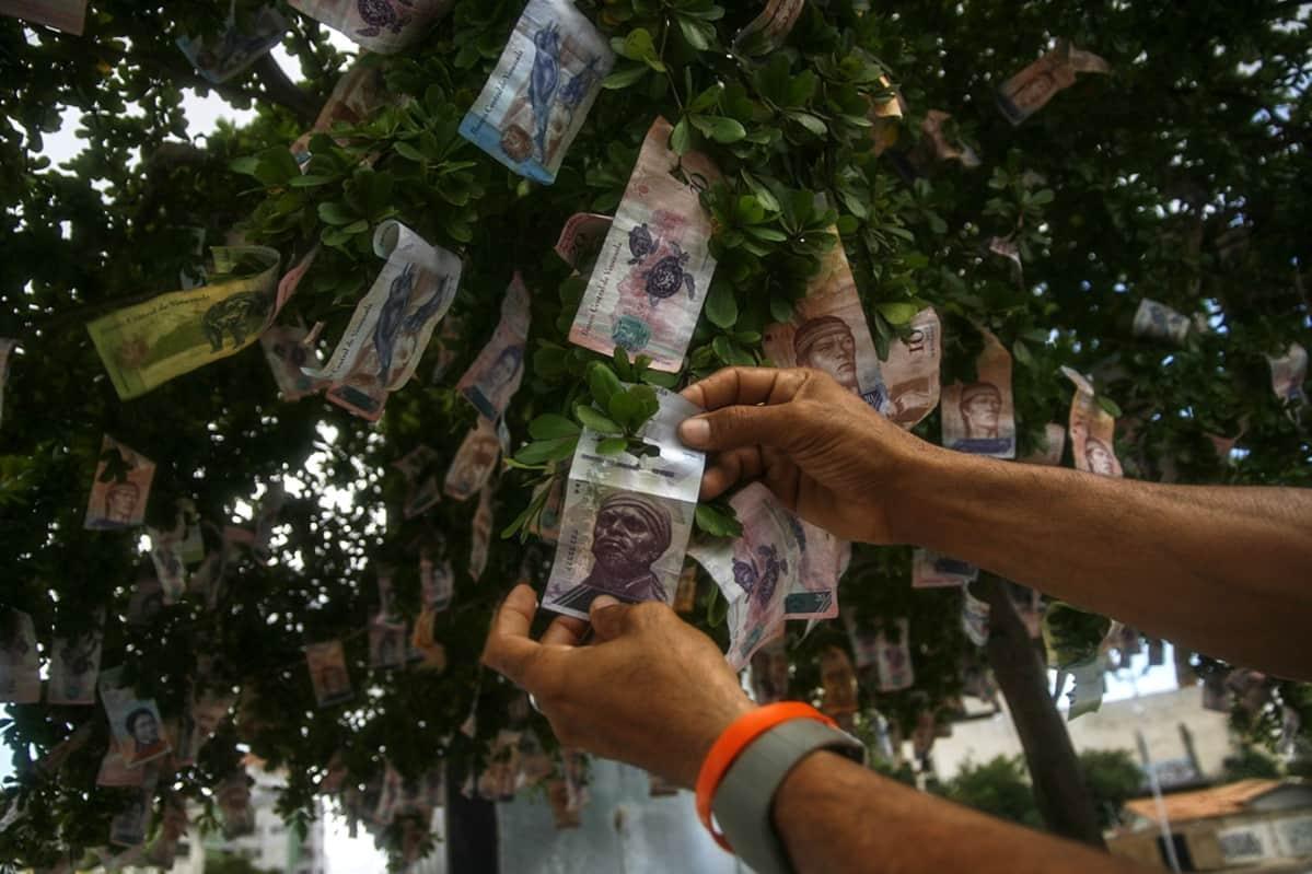 Venezuelassa arvoaan menettäneitä seteleitä ripustettiin koristeeksi puuhun joulukuun lopussa 2017.