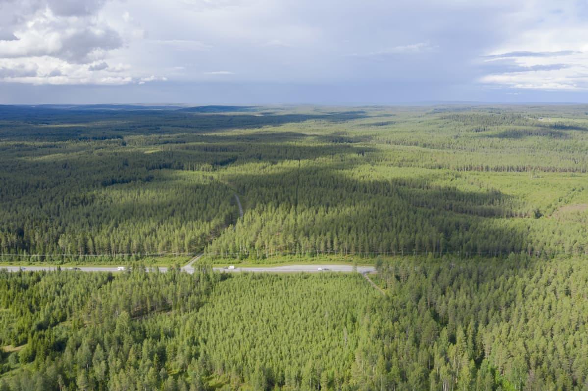 Metsää Paltamossa.