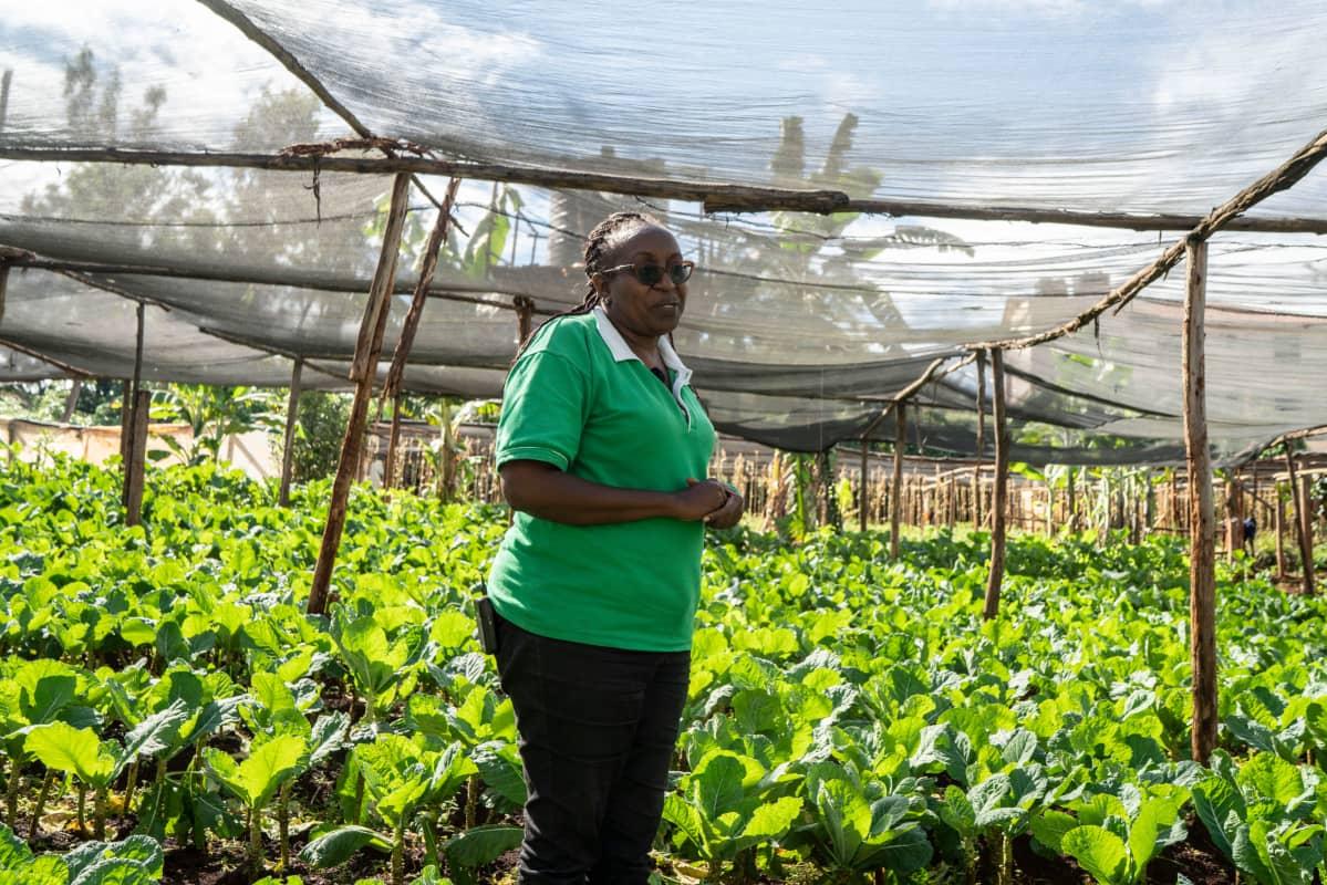 Fidelice Wanjiru haluaa viljellä mahdollisimman luonnonmukaisesti, koska sille on Keniassa tällä hetkellä suuri kysyntä. Muuttuvien sääolosuhteiden takia Keniaa vaivaavat nyt uudet tuholaiset, joita on hankala torjua.