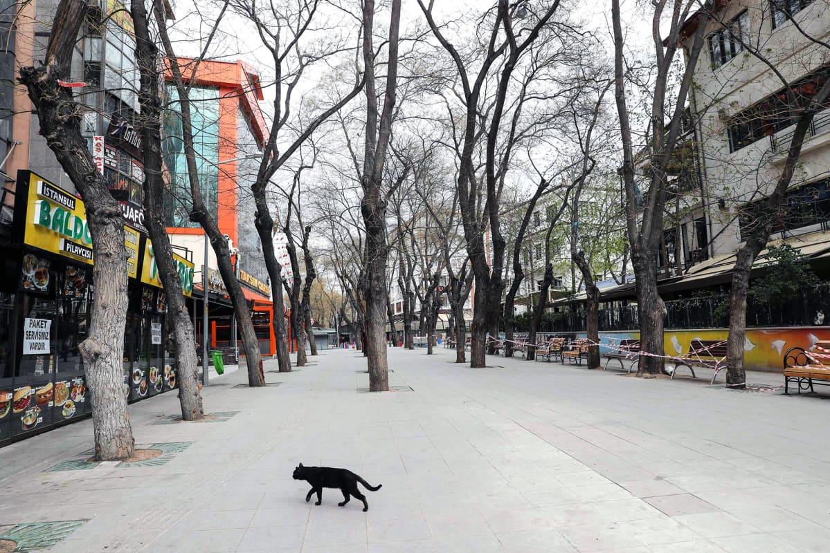 Kulkukissa kävelee autiolla kadulla Turkin Ankarassa.