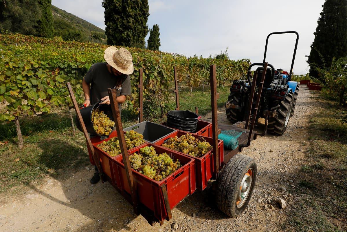 Viininviljelijä, viinipelto, Ranska