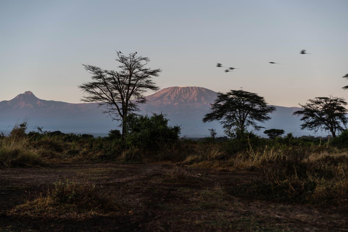 Kimanan luonnonsuojelualue sijaitsee aivan Tansanian rajan tuntumassa. Toisella puolella rajaa komeilee Afrikan korkein vuori, Kilimanjaro.