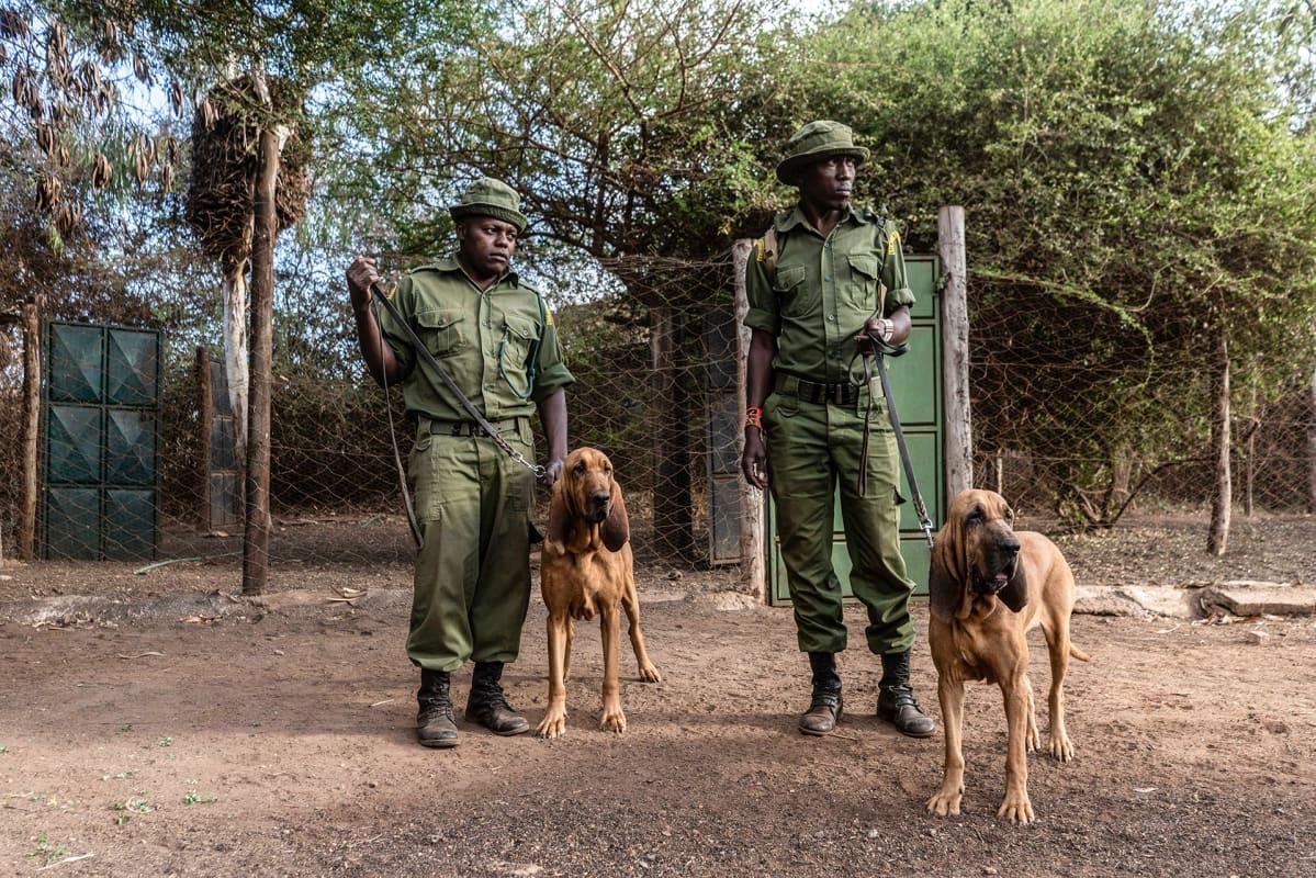 Puistonvartijoilla on käytössä myös vihikoiria salametsästäjien jahtaamisessa. Ne voivat jäljittää jopa vuorokauden vanhoja jälkiä.