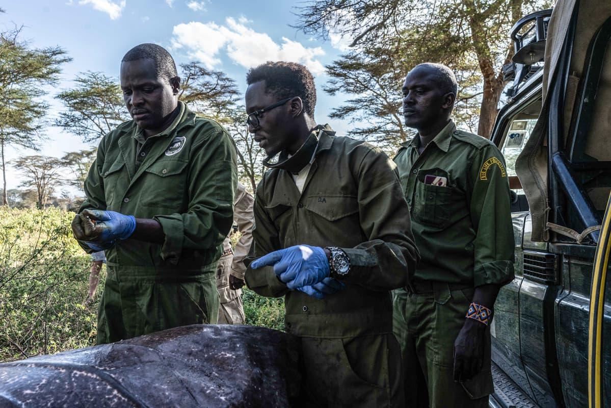 Eläinlääkäri ja hänen tiiminsä lennätettiin läheisestä Tsavon kansallispuistosta hoitamaan loukkaantunutta norsua.