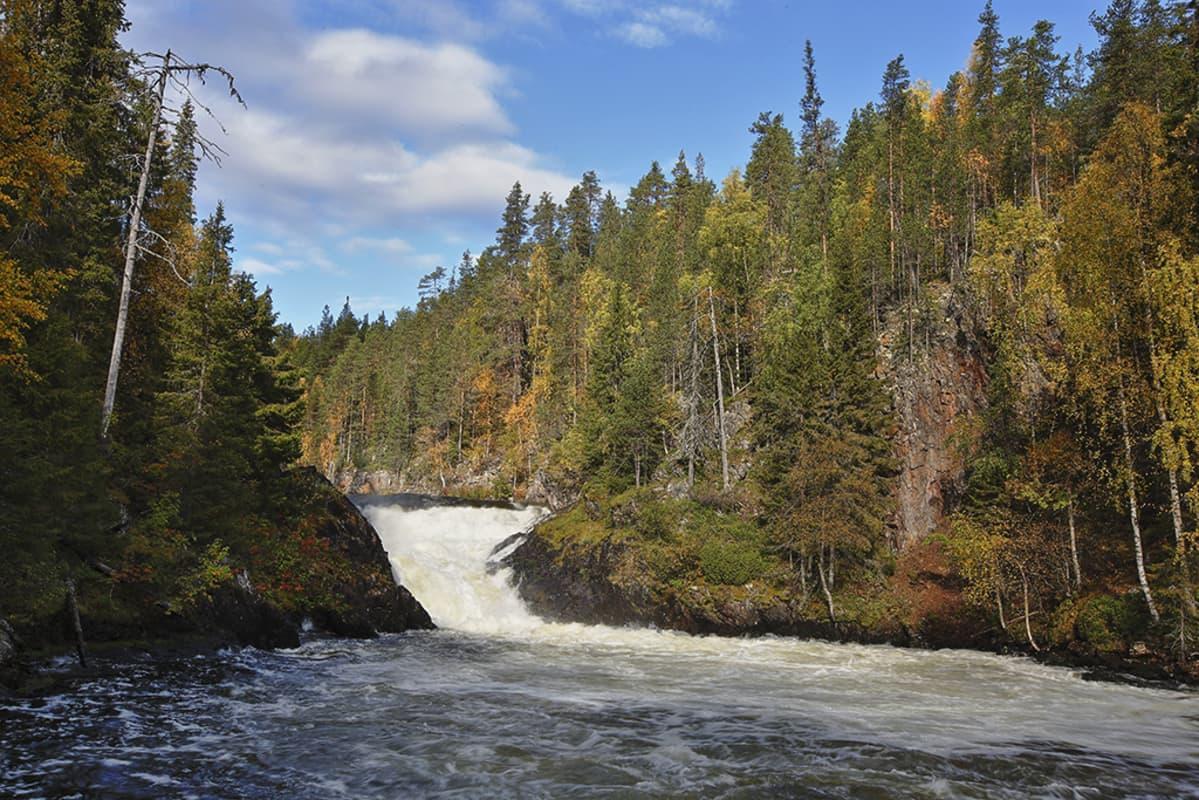 Jyrävänkoski Oulangan kansallispuistossa.