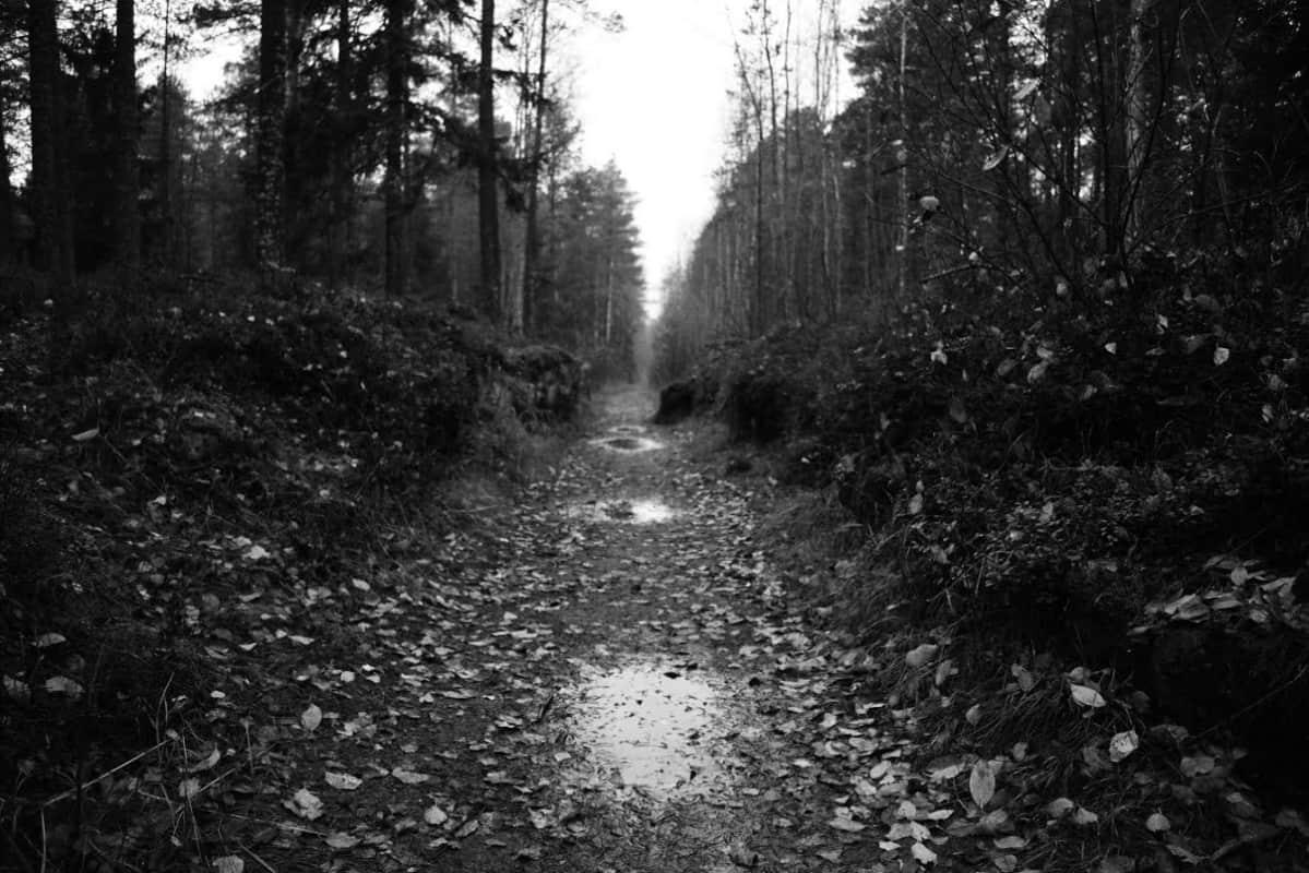 Mysteeripolku sai alkunsa vaasalaisesta urbaanilegendasta, josta Marko Hautala on kirjoittanut myös Kuokkamummo-romaanin.