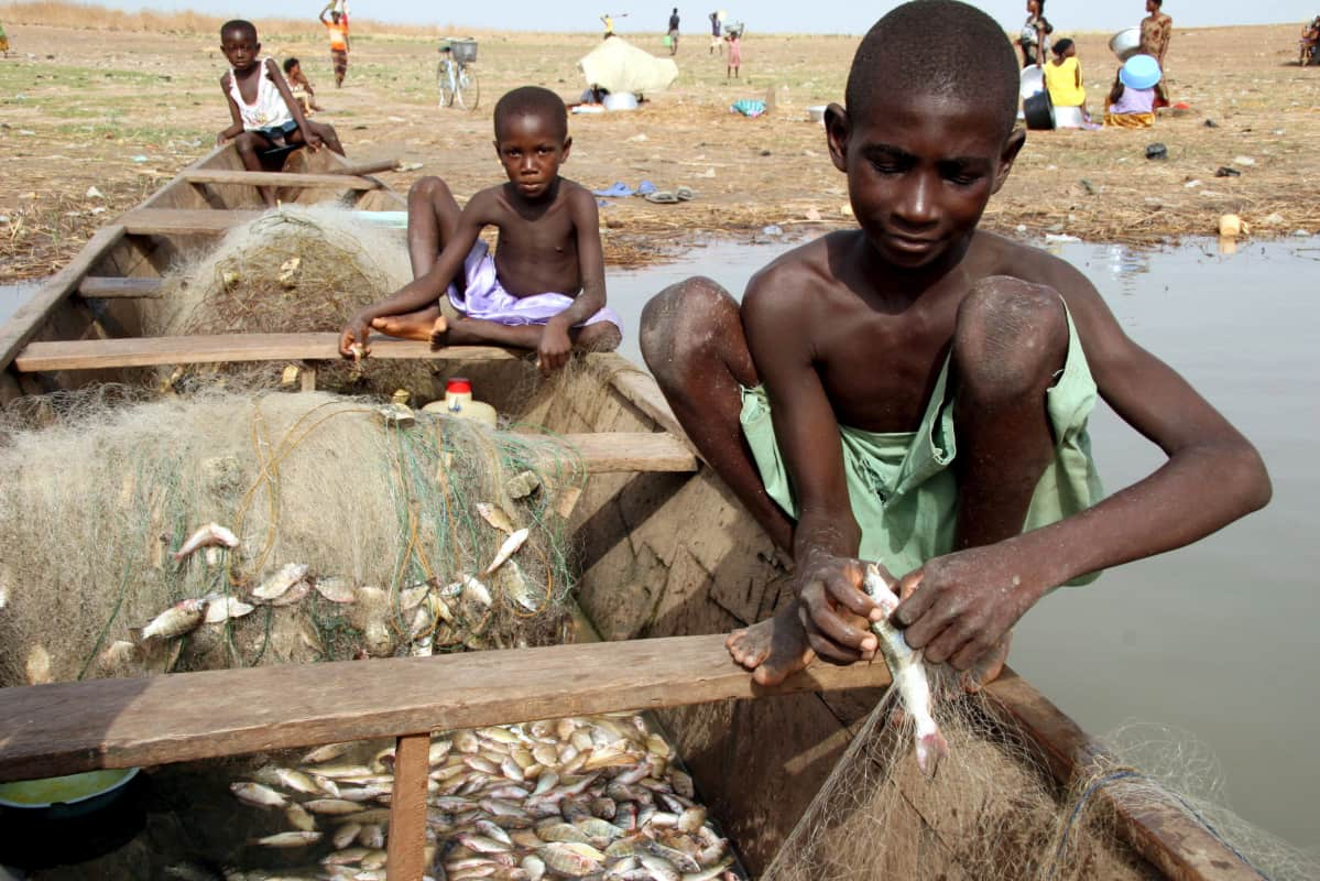 Pojat irrottavat kaloja verkoista.