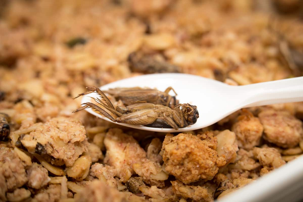 Foodwest Sirkkamysli_3.jpg