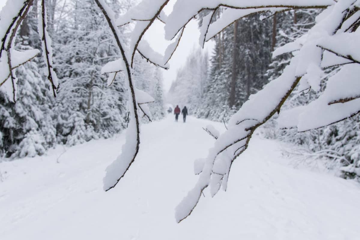 kaksi ihmsitä kävelee kaukana lumisella tiellä