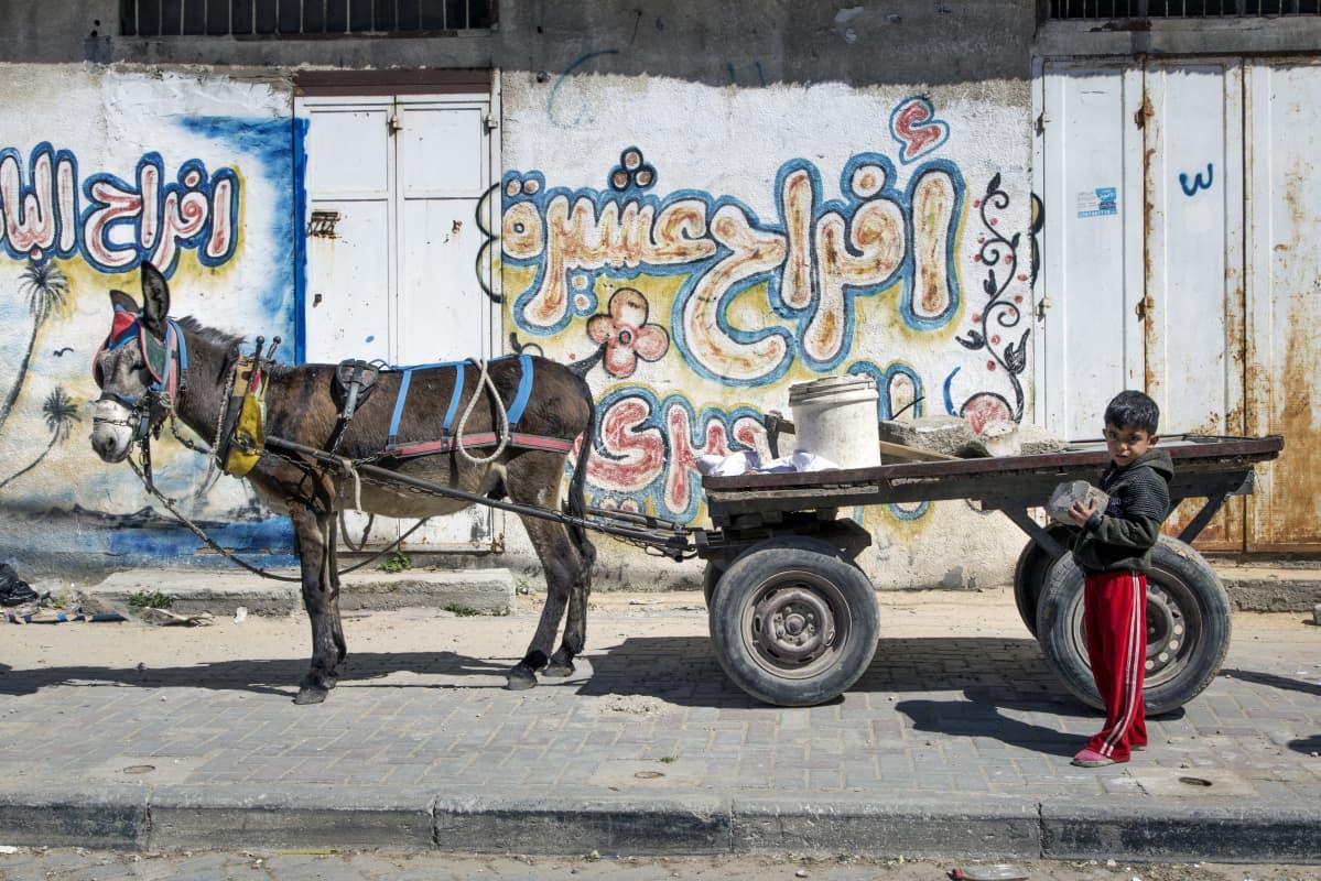 Tuntematon poika ja aasi kadulla Gazan pohjois-osassa.