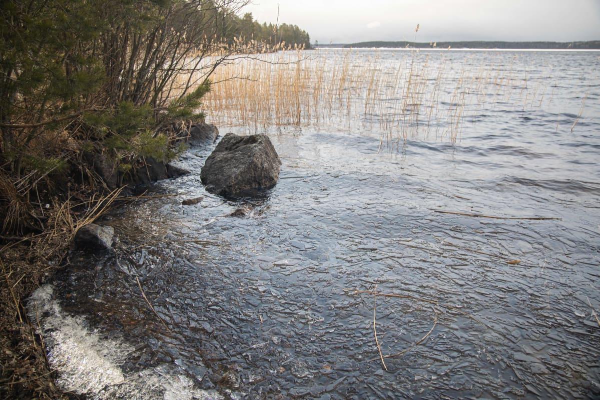 Jäät ovat sulaneet Saimaasta Kivisalmen edustalla Lappeenrannassa.