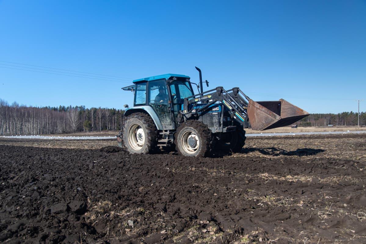 Perunanviljelijä Sami Tapanainen kyntää traktorilla peltoa Savitaipaleella.