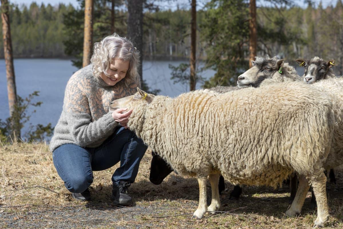 Suvi Heinola rapsuttelee perheen lemmikkilampaita