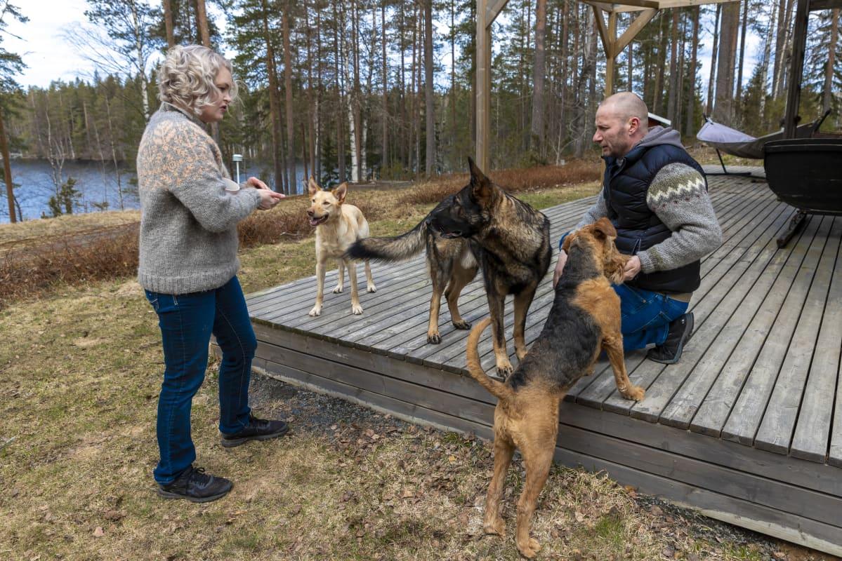 Teppo ja Suvi Heinola touhuavat pihallaan kolmen koiransa kanssa