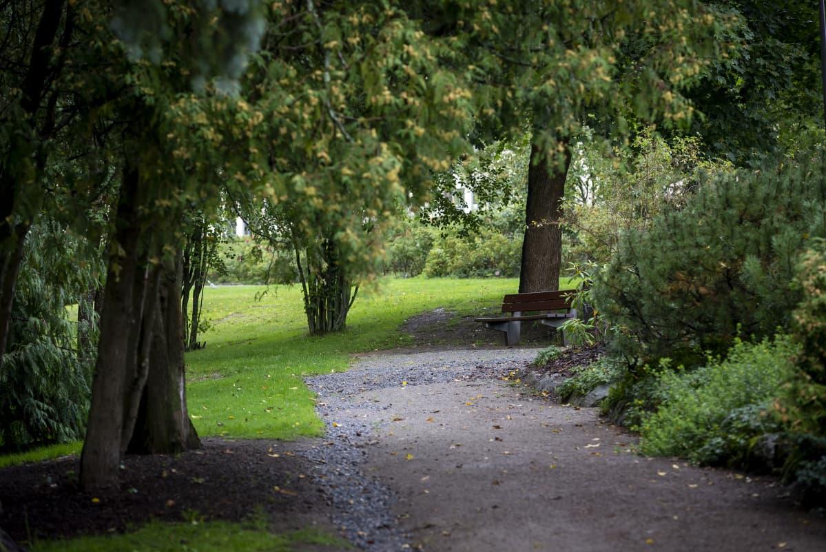 Polku puistossa.