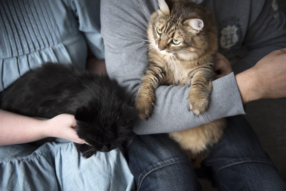 Pariskunta pitelee kahta kissa sylissänsä.