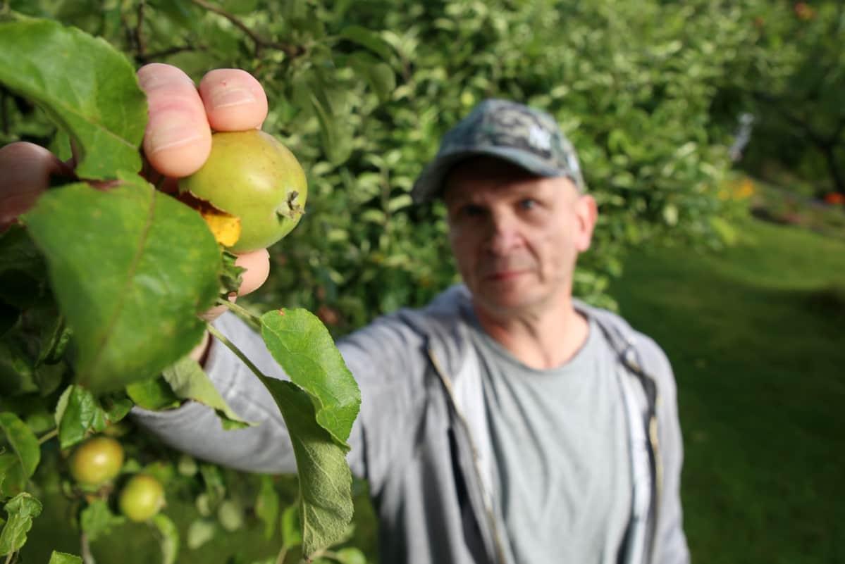 omena omenasieppari yritys Susanna Pykäläinen Arto Dahlberg