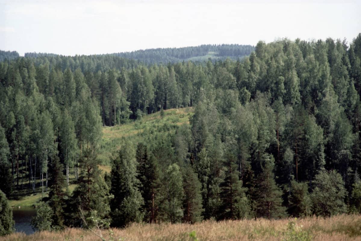Kesäinen metsä