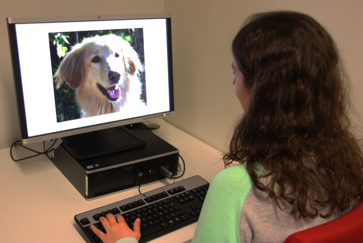 tutkimus koirien ilmeiden tulkinnasta