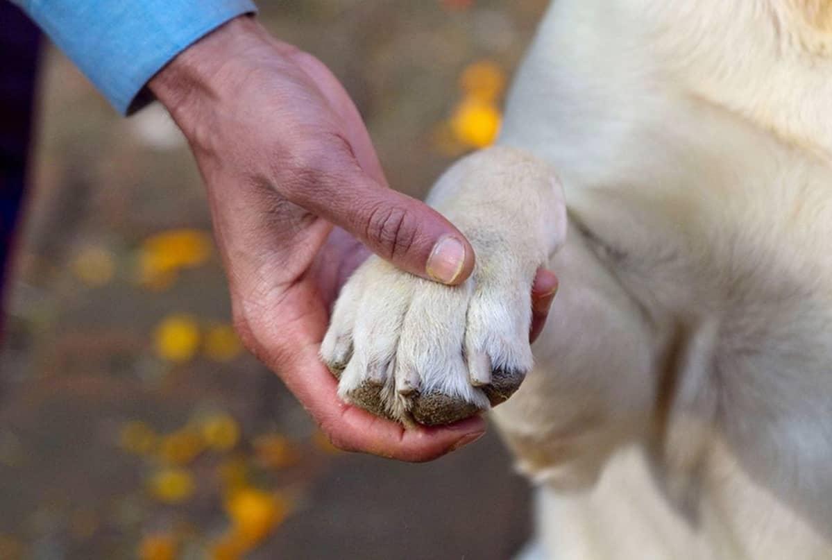 Koiran tassu ihmisen kädessä.