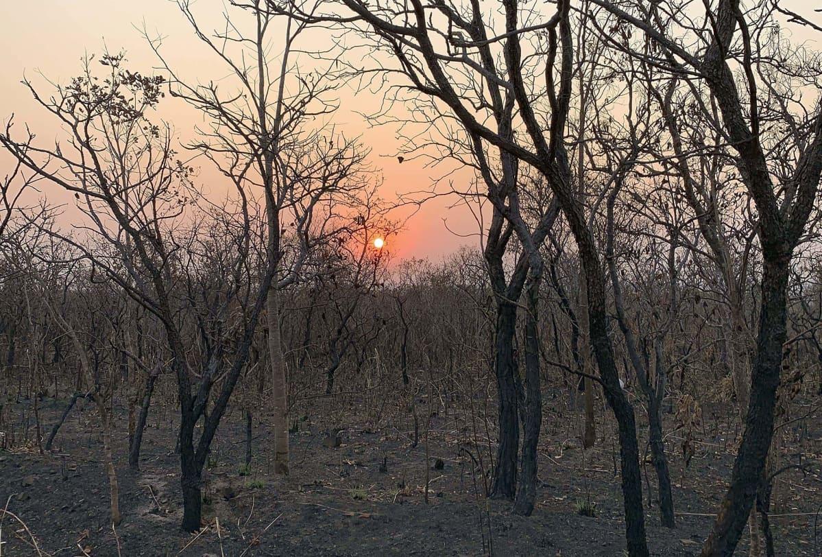 Maastopalojen jälkiä Mato Grosson osavaltiossa Brasiliassa 20. elokuuta.