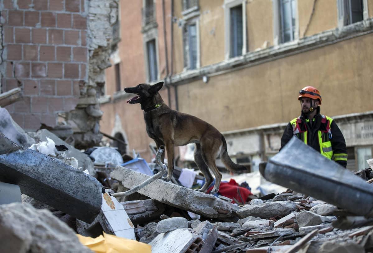 Koira seisoo raunioiden päällä. Taustalla pelastusmies.