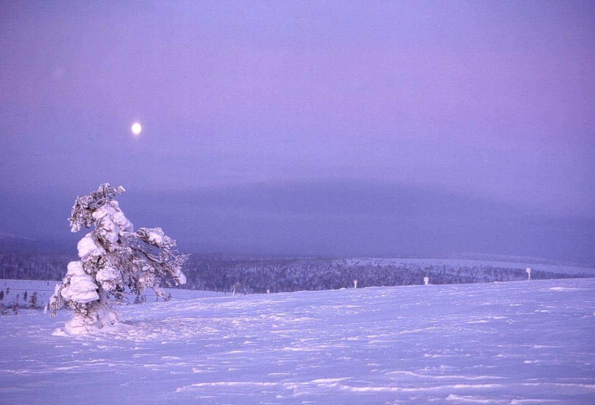 Lappi. Kiilopää. Talvi. Lumi. Talvinen tunturimaisema. Luminen hanki. Lumen peittämä puu. Kuu. Kuutamo Kiilopäällä.