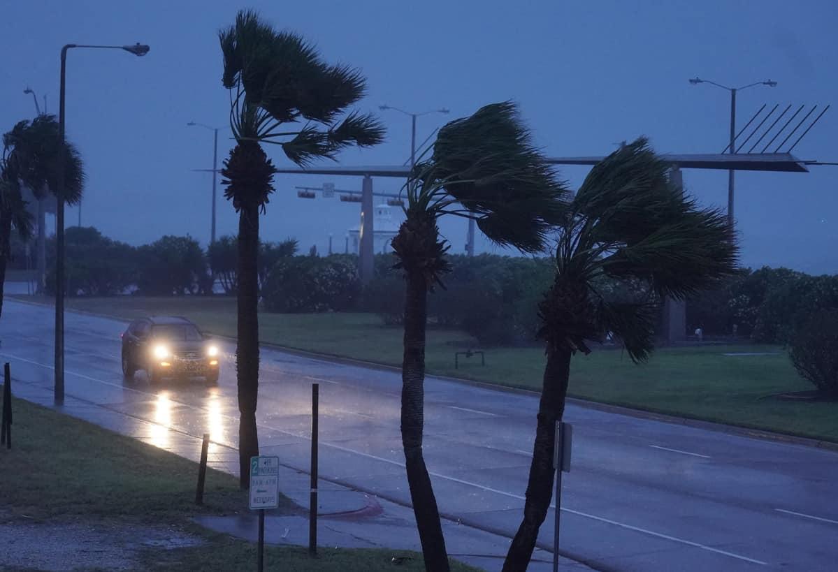 Harvey-hurrikaani riepottelee palmuja Corpus Christin kaupungissa, Texasissa.